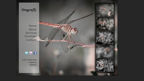 Dragonfly website template