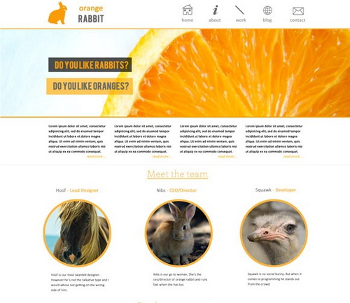 orange-rabbit-theme