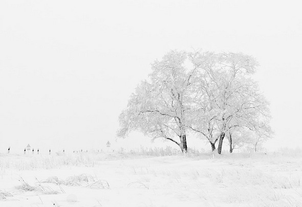 winter-nature-season-trees