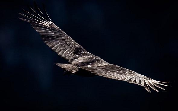 birds photography2