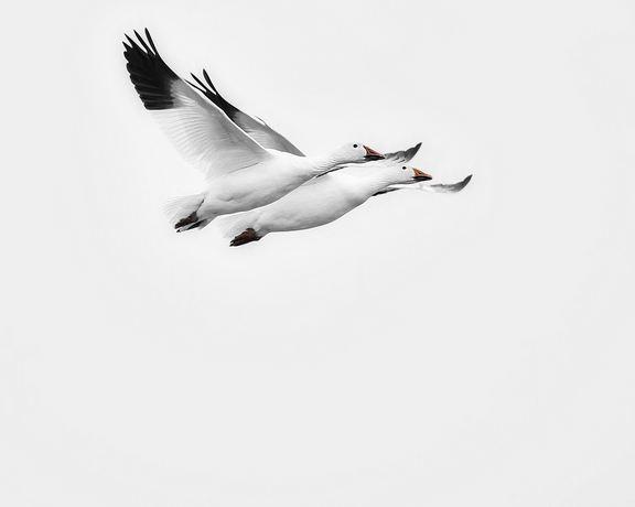 birds-photography-35